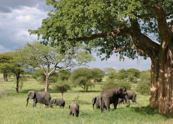 Elephant parc national de Tarangire